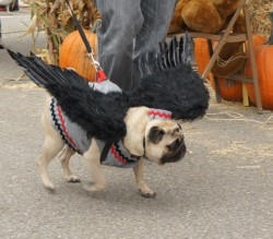 Enter the Dog Costume Contest at the Scarecrow Festival